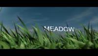 绿色草丛照片展示