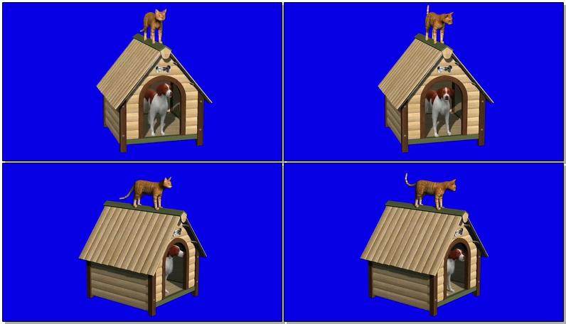蓝屏抠像狗和猫