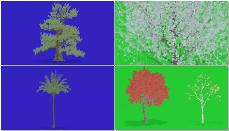 绿屏抠像狂风中的各种树木