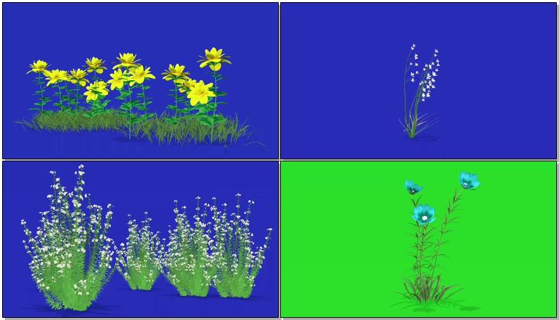 蓝屏抠像野花野草