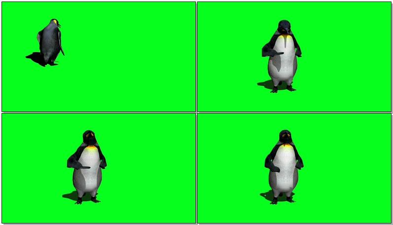 绿屏抠像南极企鹅