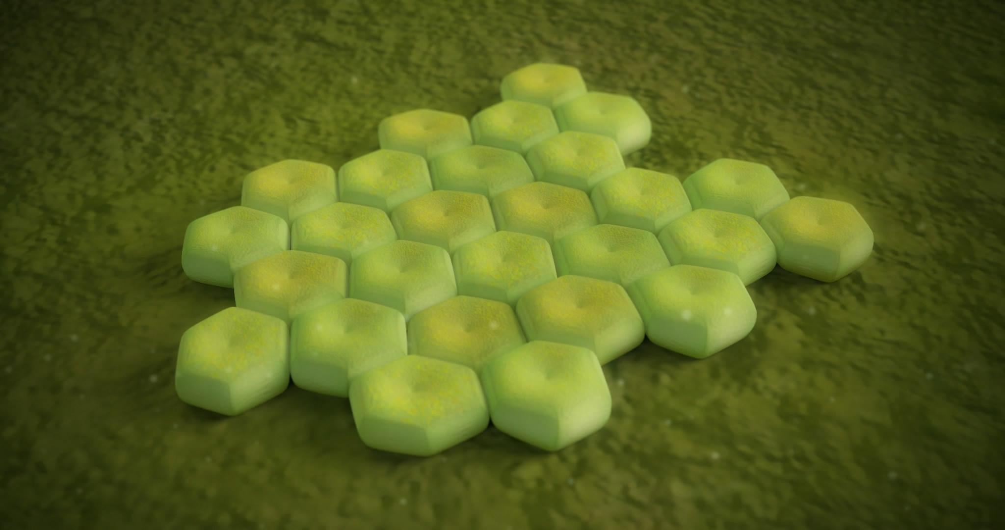 三维模拟细菌