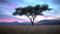 非洲野生动物表情高清实拍视频素材