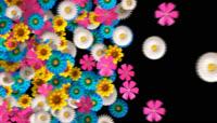 花瓣从右向左转场划屏素材