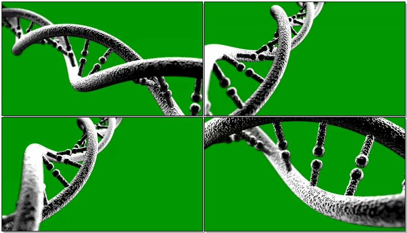 绿屏抠像细胞基因链条