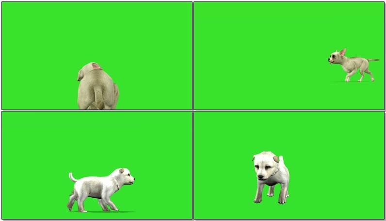 绿屏抠像卡通狗狗