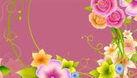 鲜花花朵高清转场划屏视频素材带通道