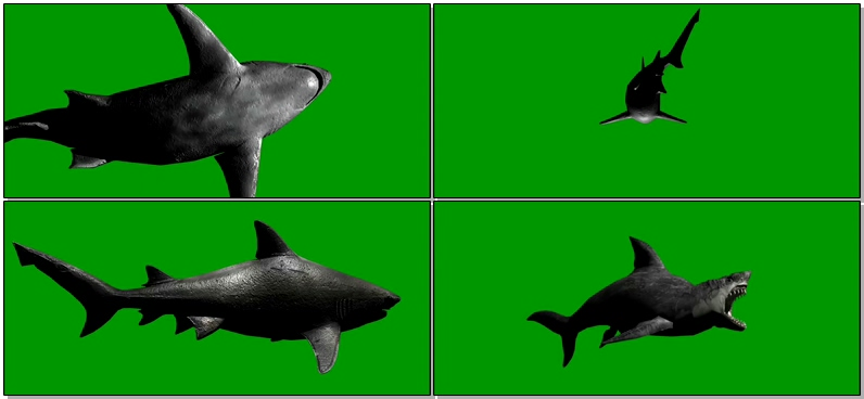绿屏抠像巨齿鲨鱼