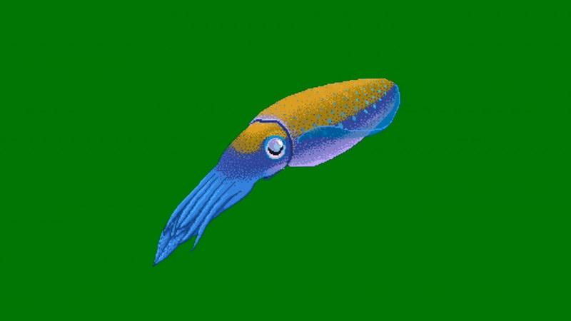 绿屏抠像鱿鱼