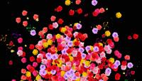 原创多色玫瑰爆炸花(带透明通道)