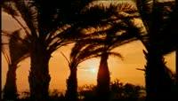 棕榈树视频实拍素材