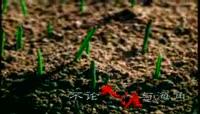 小芽破土而出视频素材