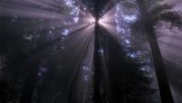 阳光移动穿过树林