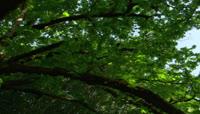 参天大树茁壮成长