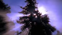 光线穿过树梢