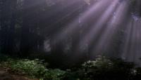 阳光穿过森林照耀大地