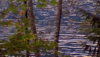 穿过树林照射的水面
