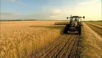 农业实拍\-收割小麦\(机械收割\)