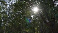 树林\&阳光
