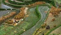 农业实拍\-梯田、水稻