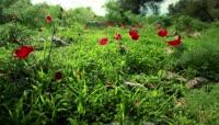 静谧森林鲜花草地高清实拍视频素材