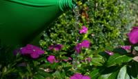 鲜花浇水延时摄影视频素材