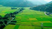 绿油油水稻秧田航拍视频素材
