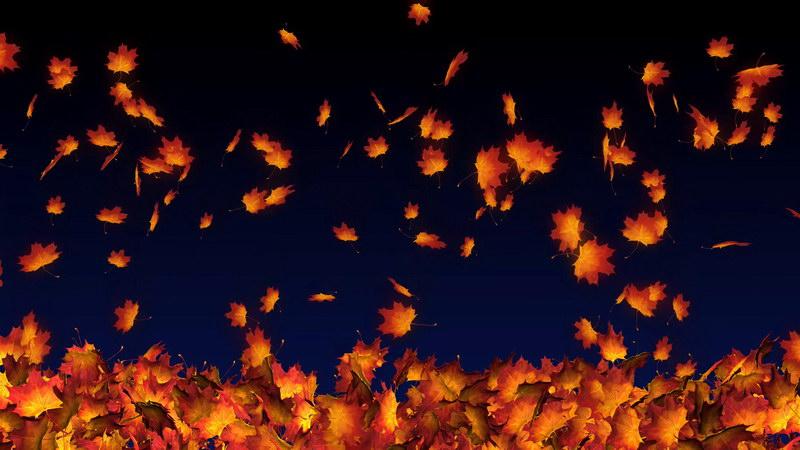 \[4K\]飘落的红色枫叶