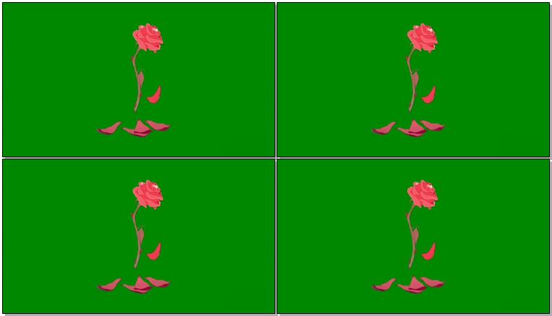 绿屏抠像凋谢的花瓣
