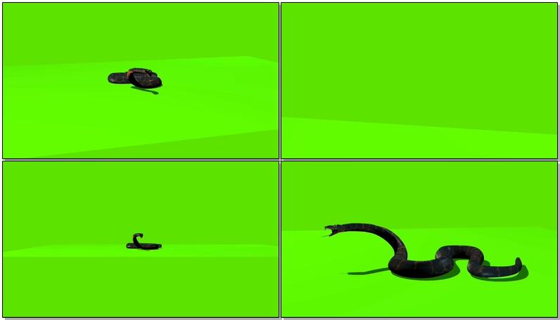 绿屏抠像爬行的蛇