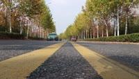 秋天城市街道两边的树木