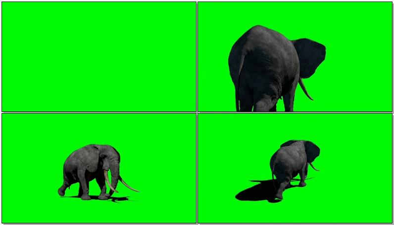 绿屏抠像大象