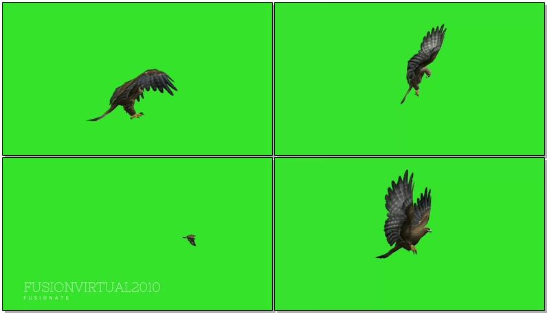 绿屏抠像飞翔的老鹰