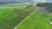 云南烟草种植基地视频素材