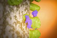 蛋白质合成 氨基酸 核糖核酸细胞3d三维动画医学