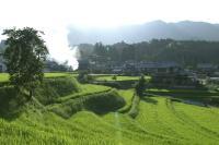 梯田水稻美景 日本农村乡下乡村田园风景风光