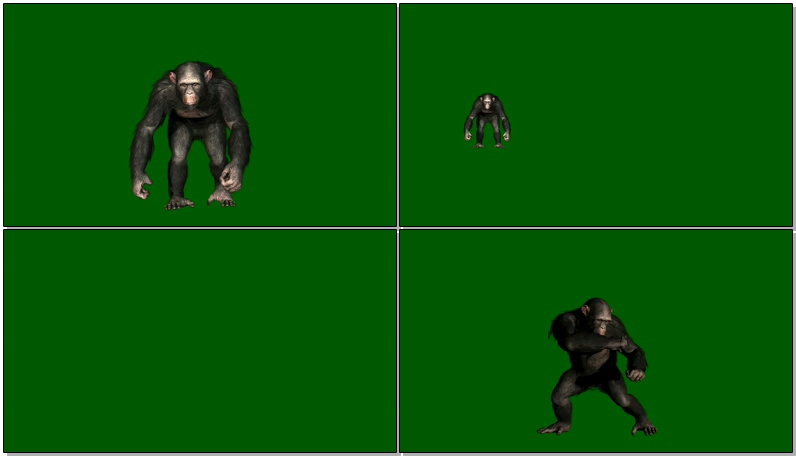 绿屏抠像黑猩猩