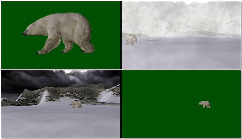 绿屏抠像北极熊