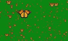 绿屏抠像飞舞的蝴蝶