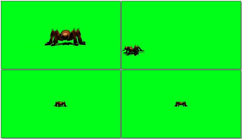 绿屏抠像巨型蜘蛛