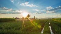 唯美农田农业视频素材 水稻田 大麦小麦 麦子地 玉米田地