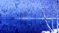唯美冬季森林雪景水中倒影