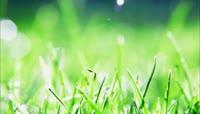 树叶水珠 绿叶水滴滑落下 叶面雨水 叶尖雨滴 叶片叶子雨珠