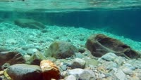 溪流水下摄影视频素材