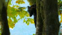 原始森林野生动物黑熊松鼠野鸡视频素材