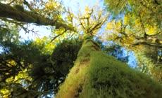 秋季原始森林中穿梭摄影视频