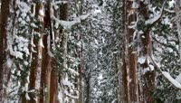 新年瑞雪森林雪景视频素材