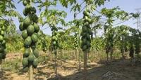 农产品水果种植基地视频素材