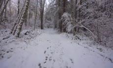 冬天雪景森林小路穿梭穿越穿行 冬季树林山路行走