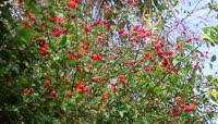 路边鲜花野果实拍视频素材